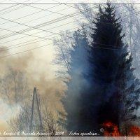 ГИБЕЛЬ  КРАСАВИЦЫ :: Валерий Викторович РОГАНОВ-АРЫССКИЙ
