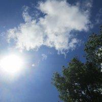 Солнышко :: Самохвалова Зинаида
