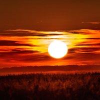 Огненный закат над кукурузным полем. :: Анатолий Клепешнёв