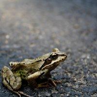 friendly frog :: krystyna