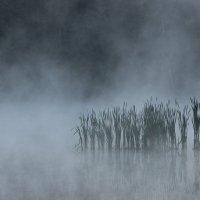 Туман :: Юлия Манчева