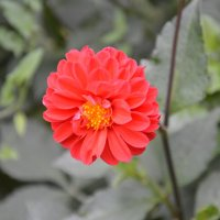 цветок :: Арина Федорова