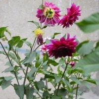 цветы :: Арина Федорова