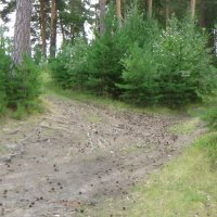 Дорога на Сугомак 1 :: Аркадий Захаров
