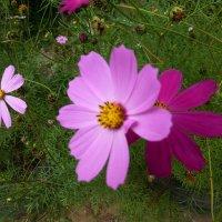Цветы 2014 :: Наиля