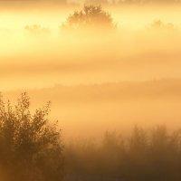 В тумане восхода.... :: Юрий Цыплятников