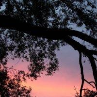 Вечернее небо :: Андрей Михайлин