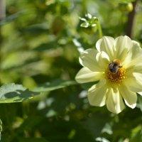 цветы :: Андрей Чиченин