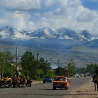 Тянь-Шань Киргизия август 2014 :: Рыжик