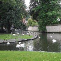 Озеро Любви (Минневотр). Лебеди — символ и собственность Брюгге :: Елена Смолова