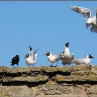 на привале :: linnud