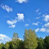 Березы на фоне неба :: Лидия (naum.lidiya)