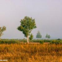 Утро туманное. :: Валерий Смирнов