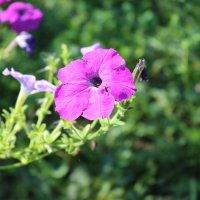 Цветок :: Кристина Шестакова