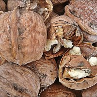 Грецкие орехи :: Нина Корешкова