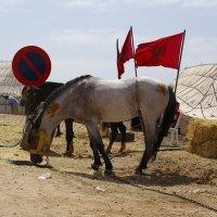 Лошадь с тату:) :: Светлана marokkanka