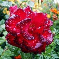 Под дождем :: Лариса Вишневская