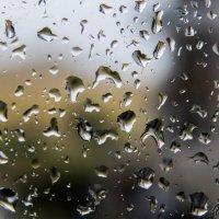 дождь. :: lev
