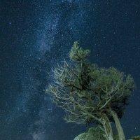 Новый Свет ночью :: Роман Любимский