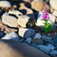 И на камнях растут цветы... :: Андрей Попов