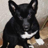 Dog :: Christina Terendii