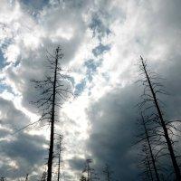облака над болотом :: Алексей Логинов