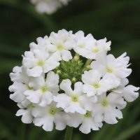 цветок :: сергей пейкер