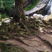 И на камнях растут деревья... :: juriy luskin