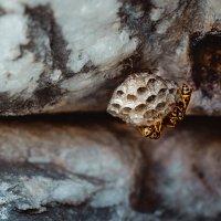 Домик на камнях :: Aisylu (Айсылу) Ahmadieva