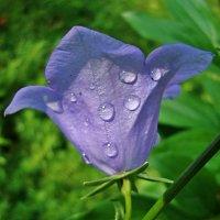 После дождя :: Лидия (naum.lidiya)
