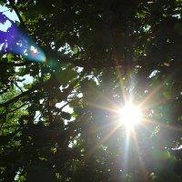 солнечный блик :: Кэтрин Ли