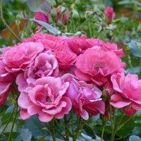 Розовый букет :: Татьяна Лобанова