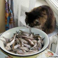 Ешь, сколько хочешь ешь :: Наталия Короткова