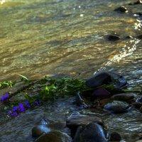 Вода-жизнь :: ФотоЛюбка *