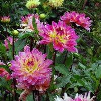 Осенние цветы Фото №1 :: Владимир Бровко