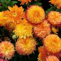 Осенние цветы Фото №4 :: Владимир Бровко