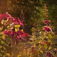 Вечернее солнышко в питерских дворах) :: Артем Никитенко