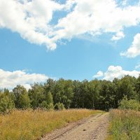 Дорога в лес :: Лидия (naum.lidiya)
