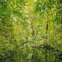 HiddenForest :: Андрей Дыдыкин