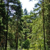Лесной уголок :: Александр Садовский