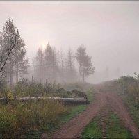 Из жизни деревьев :: Любовь Потеряхина