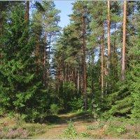 Грибной лес. :: Роланд Дубровский