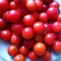 Красная ягода :: Миша Любчик