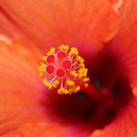 pestiki ti4inki :: Valerija Bilotiene