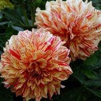 Осенние цветы Фото№11 :: Владимир Бровко