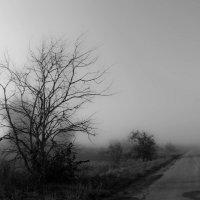 Утренний туман :: Геннадий Хоркин