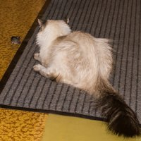 Кошки мышки :: Алексей Масалов