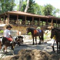 Лошадки в парке ждут своих наездников :: Marina Timoveewa