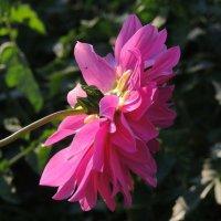 цветок :: Артём Захарин