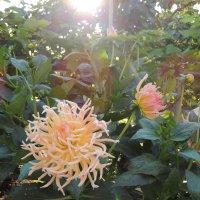 цветы :: Артём Захарин